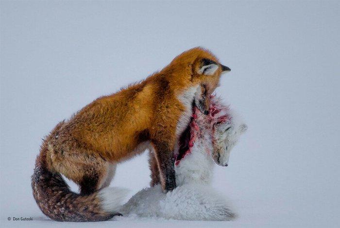 Лучшие фотографии дикой природы 2015 года