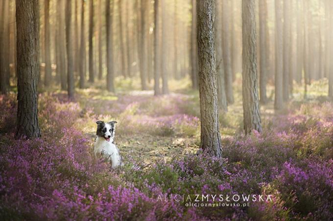 Алисия Змысловска: 20 красивых розовых портретов собак