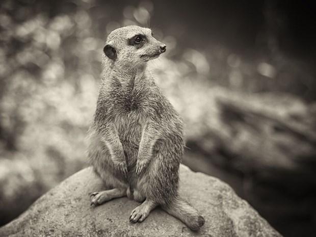 Живут рядом с нами на планете! Иногда попадают на снимки National Geographic