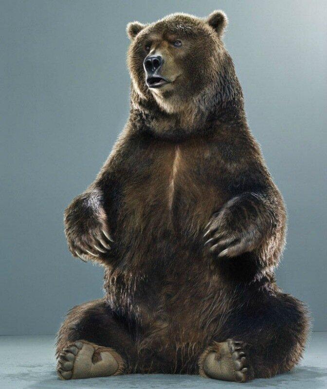 Серия фотографий Ursine   медвежьи портреты Джилл Гринберг