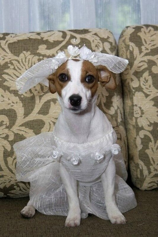 Свадебные фотографии зверей: невесты с клыками и женихи с хвостами