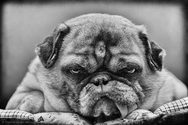 Лучшие друзья человека: 30 фотографий собак