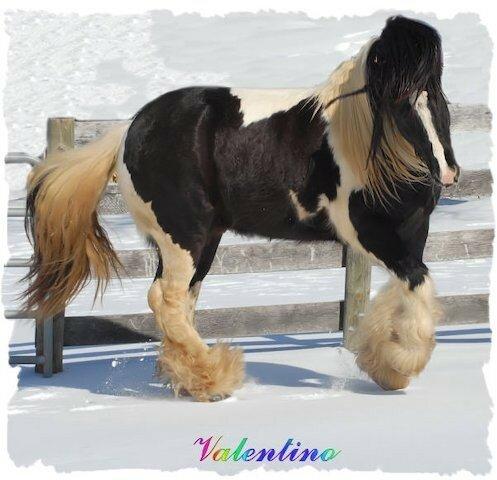 Необыкновенной красоты лошади!