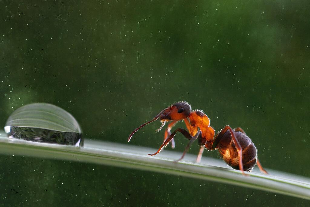 Обзор ярких представителей тропических муравьев Амазонии