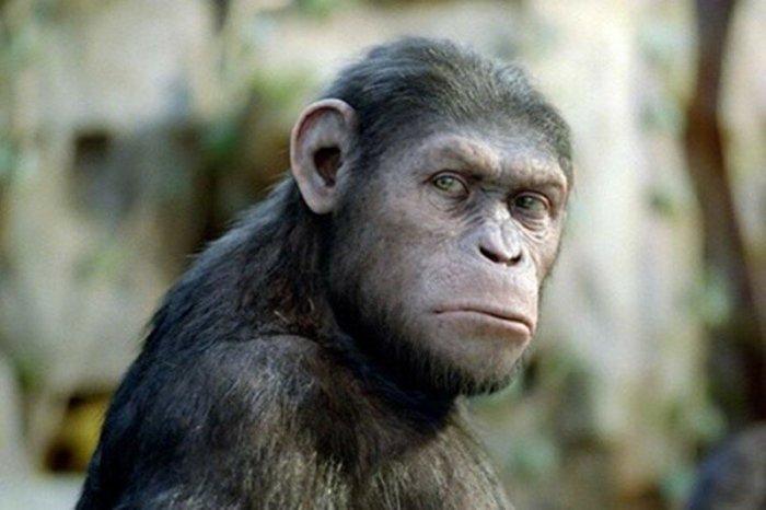 Необычные удивительные факты о животных