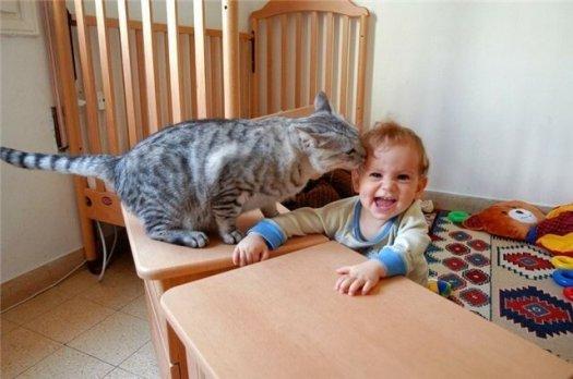 Как и какие животные умеют лечить людей