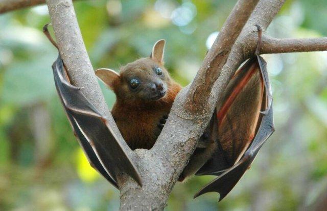 Боевые летучие мыши и другие необычные животные, которые используются на войне
