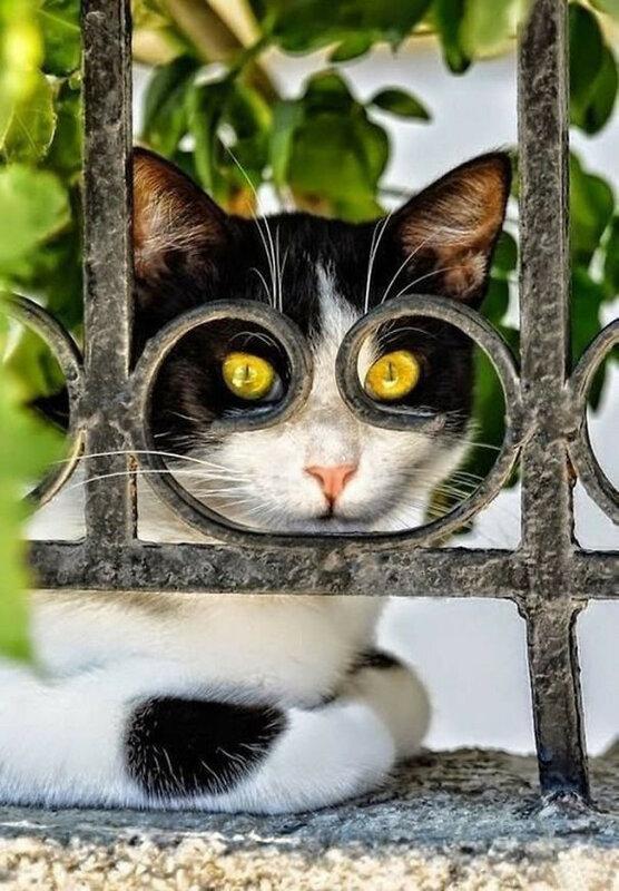 52 фотографии кошек и котов, сделанные в самый нужный момент