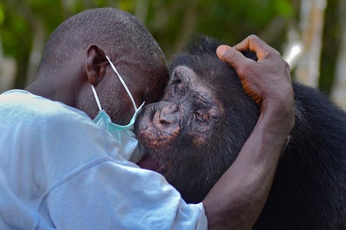 Фотоистория самого одинокого шимпанзе на свете