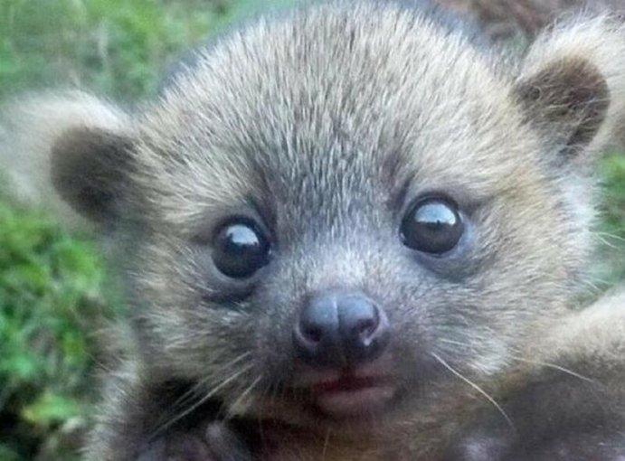 Ученые публикуют в Twitter забавные фотографии своих подопытных животных