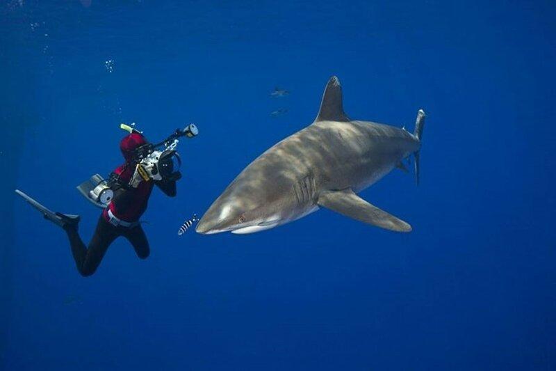 Жизнь в океане. Подводные фотографии Дэвида Флитема