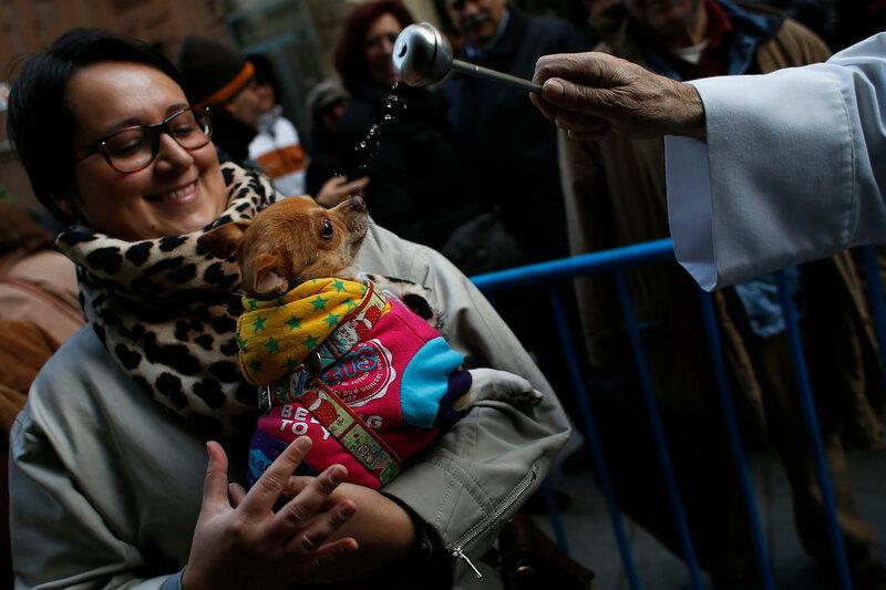 Благословление собак, попугаев и других животных в католической церкви Мадрида