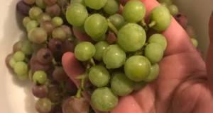 Sour Grapes Pickles