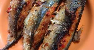 Ikan Kembung Hamil Di Luar Nikah