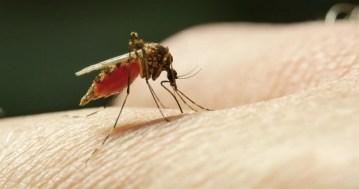 https: img-k.okeinfo.net content 2018 08 13 481 1935746 5-langkah-ini-bisa-bantu-cegah-penyakit-malaria-EOoXHbH4JJ.jpg