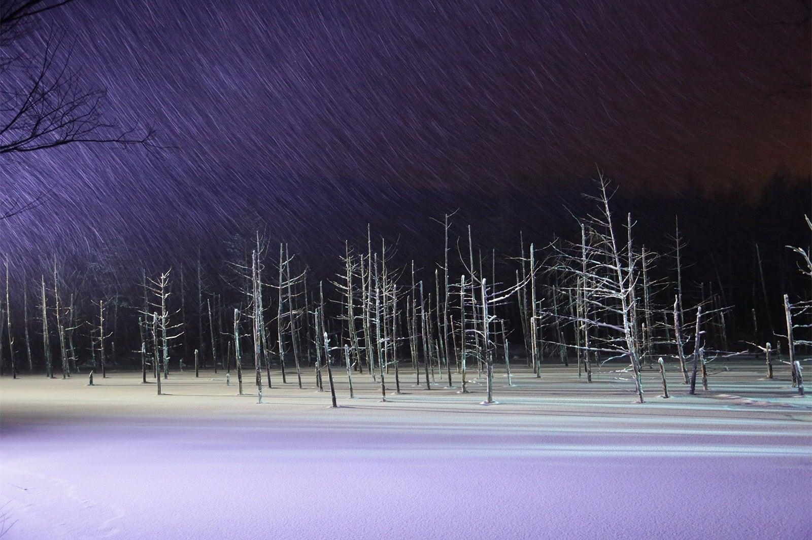 """北海道美瑛の絶景""""青い池""""は冬季ライトアップも神秘的な ..."""