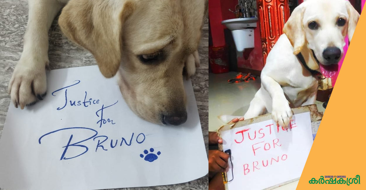 Kerala speaks for Bruno;  The High Court asked the government what the action was