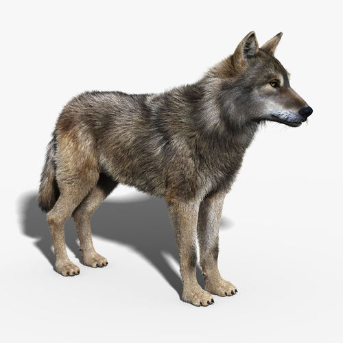clean the kitchen games 4 piece appliance package gray wolf fur rigged 3d model animated .max .obj ...