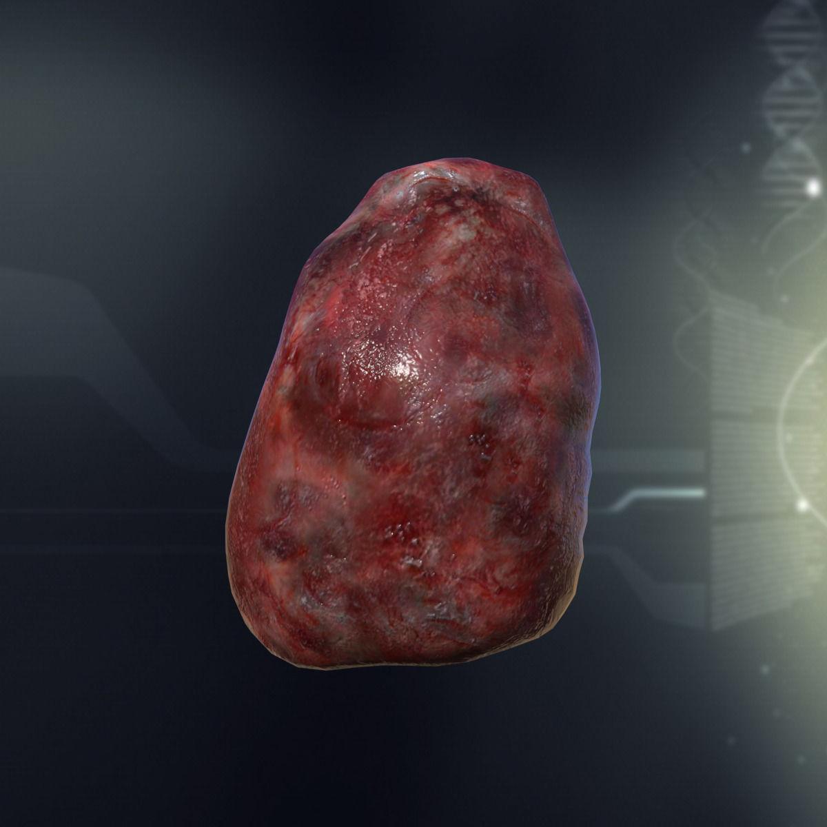 Human Spleen Anatomy 3d Model Game Ready X Obj 3ds