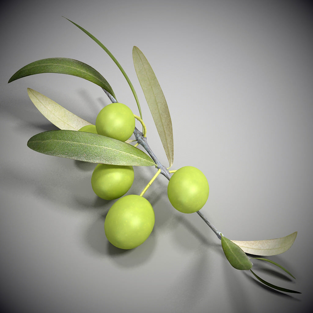 Olive Branch 3D Model Max Obj 3ds C4d