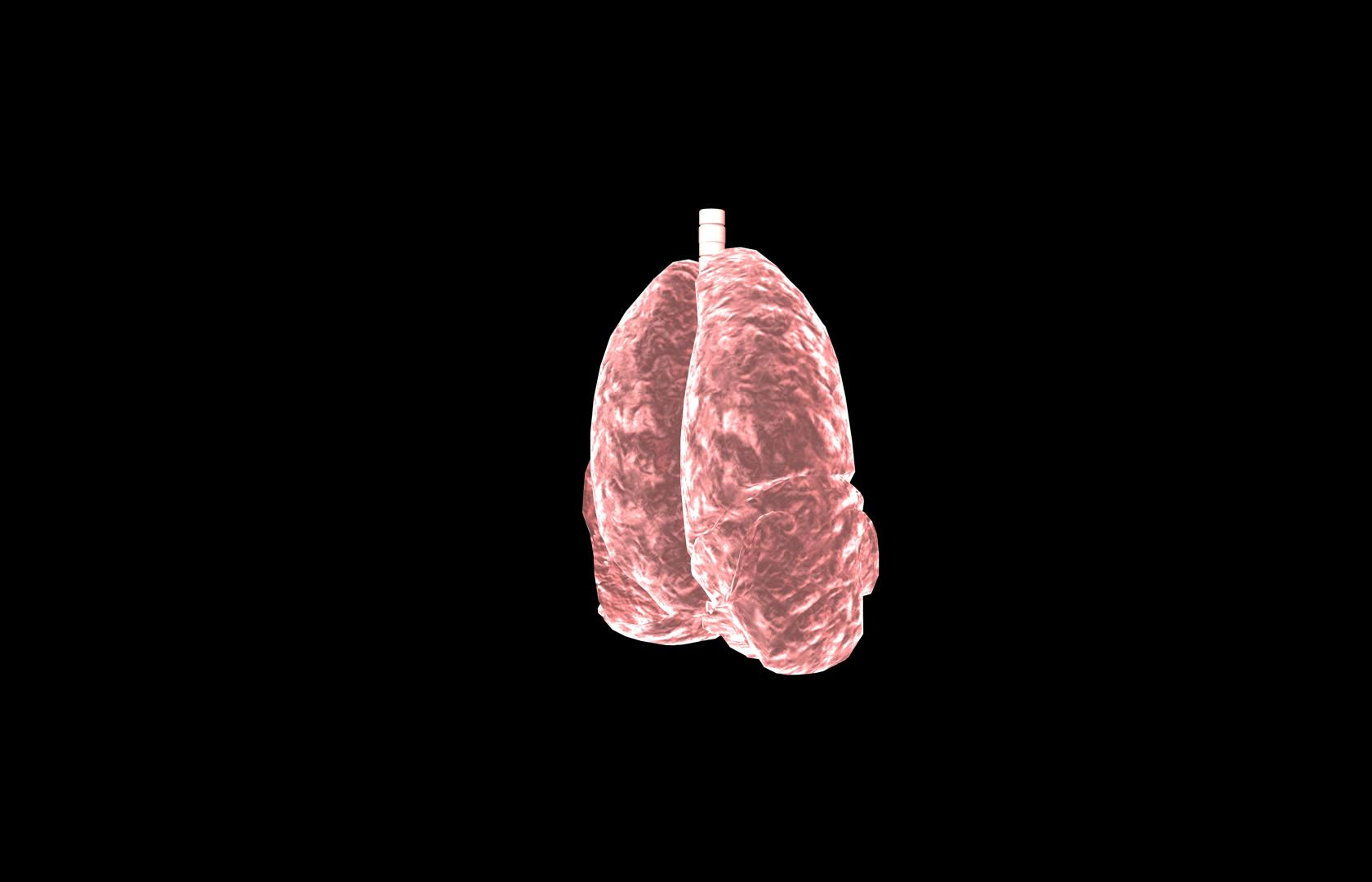 Lung 3d Model With Lobes Medically Accurate 3d Model