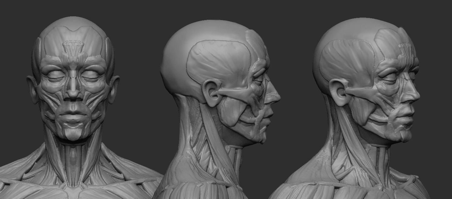 Male Ecorche Human Anatomy Reference 3D Model 3D Printable