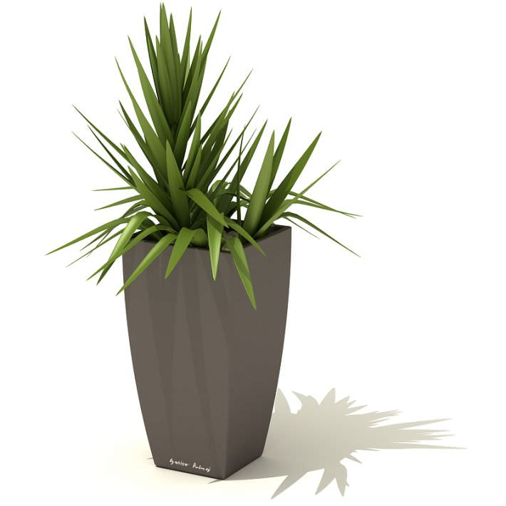 Green Interior Potted Plant 3D Model