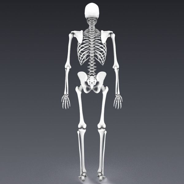 Lowpoly Skeleton Character Rigged With Movement - Year of
