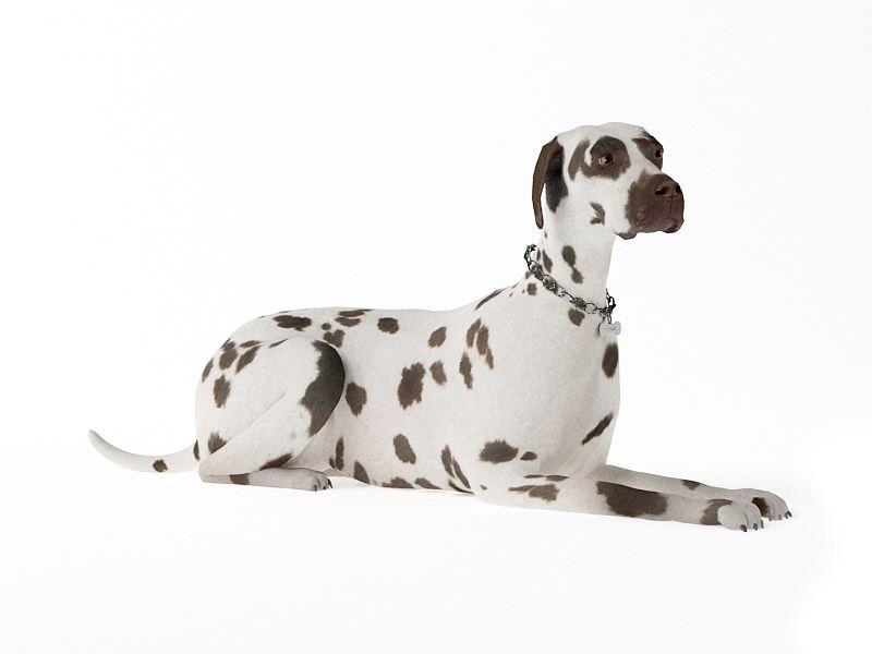 Adult Dog Laying Down 3D Model CGTradercom