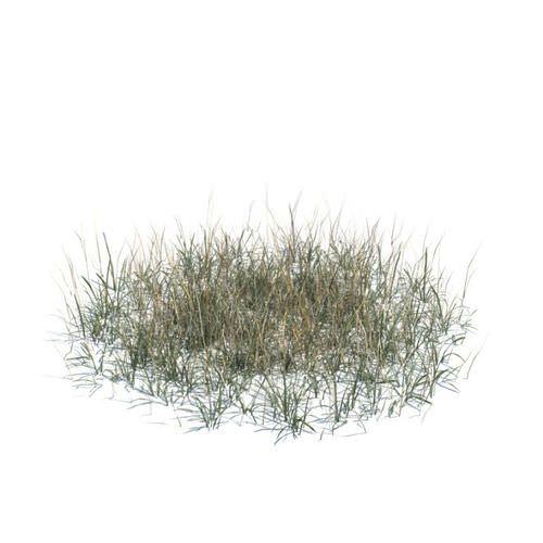 Long Dry Grass 3D Model