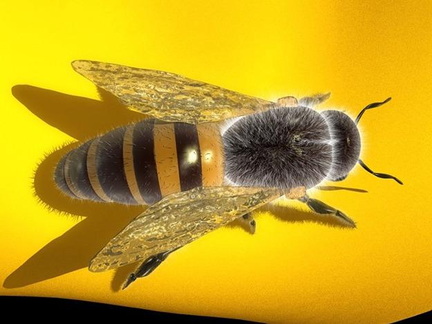 Honey Bee 3D Model Max Obj 3ds Fbx