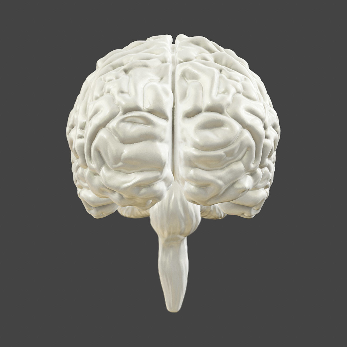 Printable Accurate Human Brain 3d Model 3d Printable Obj