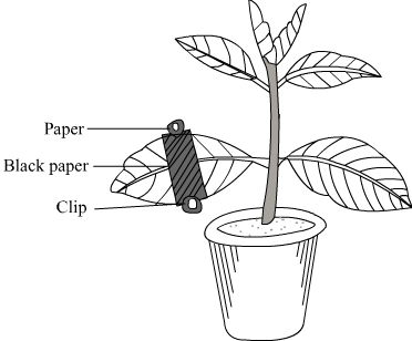 Board Paper Solutions for ICSE Class 10 BIOLOGY Board