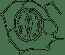 Lakhmir Singh Manjit Kaur Biology 2019 for Class 10