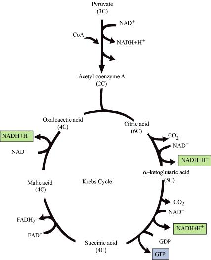 NCERT Solutions for Class 11 Science Biology Chapter 14