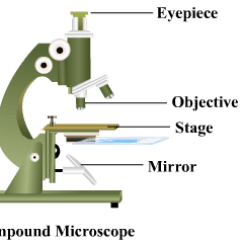 A Well Labelled Diagram Of Microscope 97 Grand Cherokee Fuse Give Compound Using Typical Expert Answer