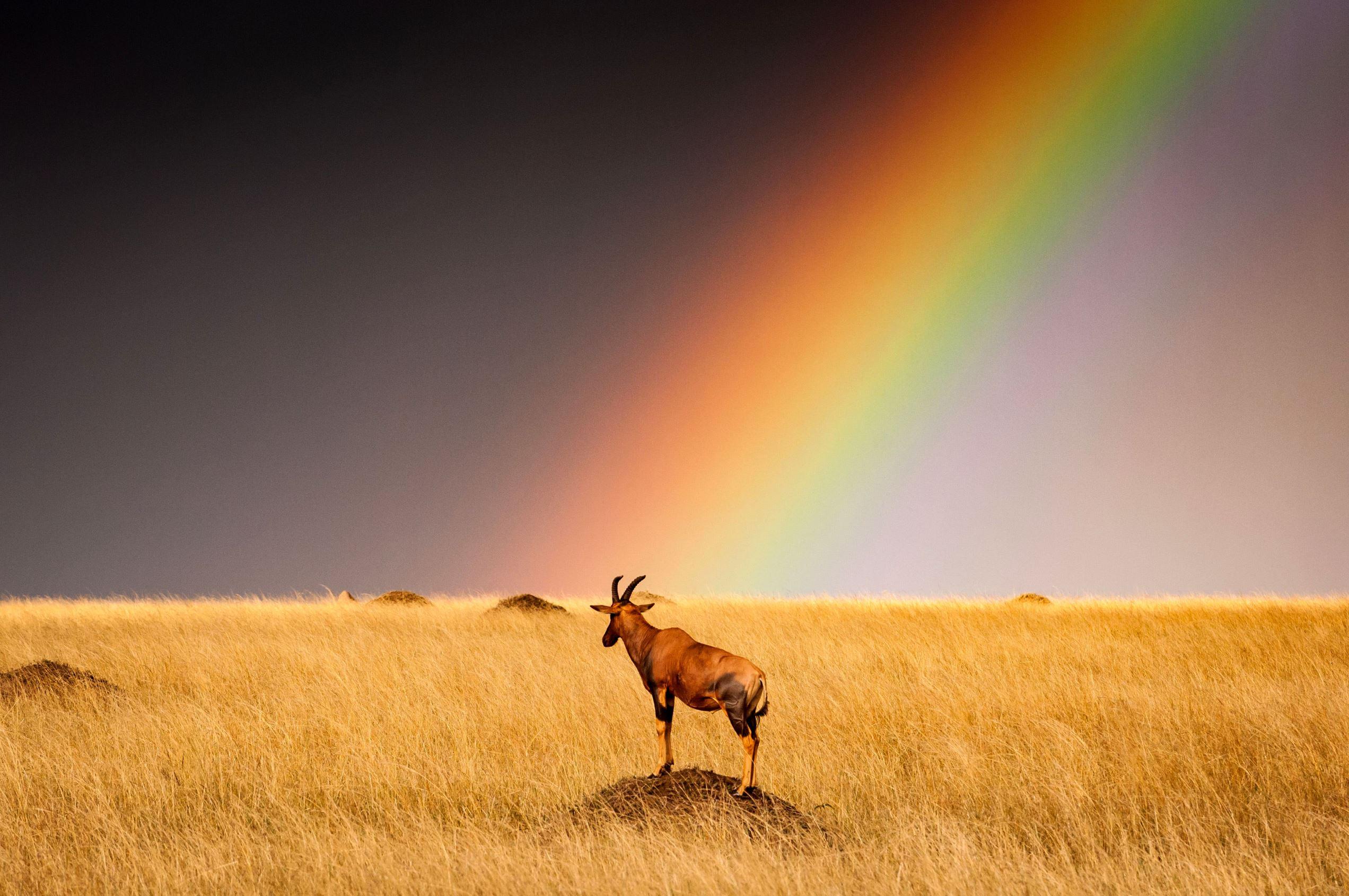 Слайд 8 из 67: Kenya Masai Mara Nature Reserve, Africa - 24 Aug 2016 Early morning storms on the Kenya Masai Mara Nature Reserve