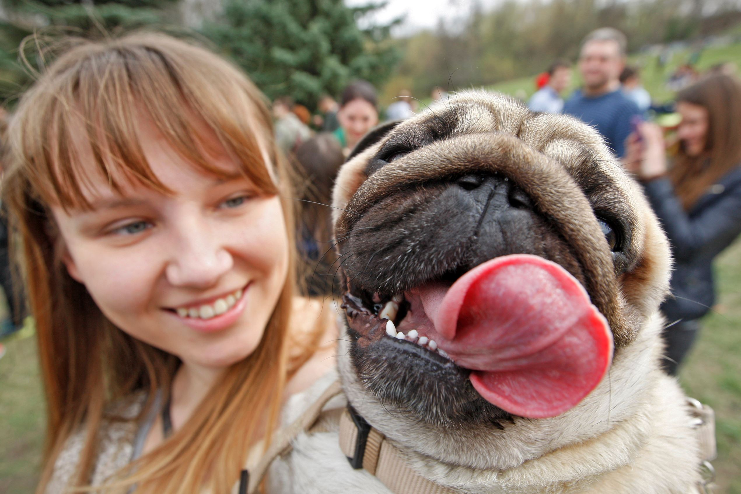 Слайд 37 из 67: A pug attends 'Pug Party' in Kiev, Ukraine.