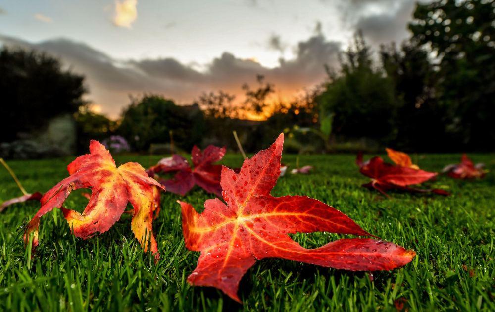 好奇心   在秋季環游世界是一種怎樣的感受?