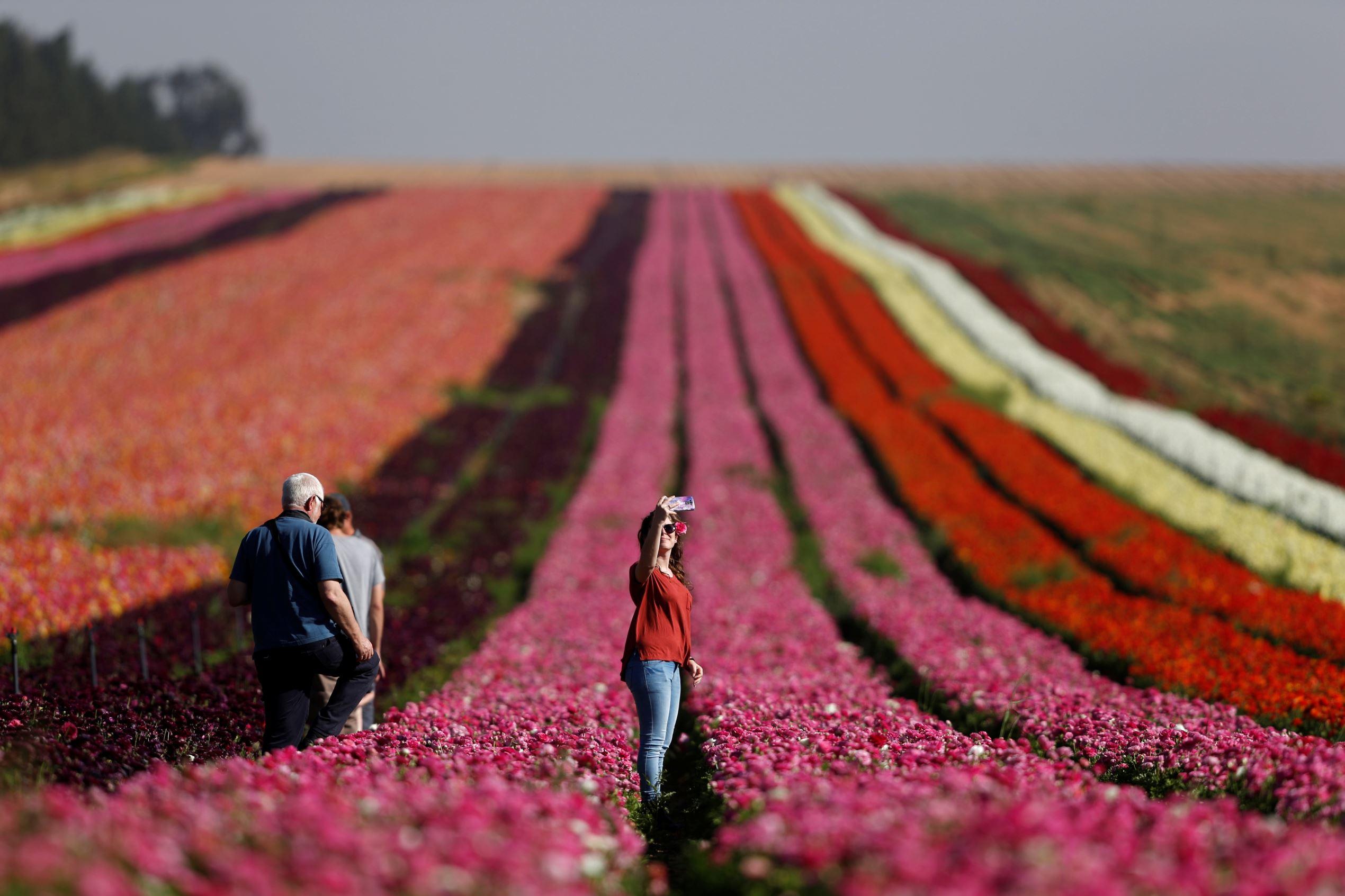 Слайд 40 из 86: An Israeli woman takes a selfie in a buttercup field near Kibbutz Nir Yitzhak in southern Israel, just outside the Gaza Strip April 18, 2016. REUTERS/Amir Cohen TPX IMAGES OF THE DAY