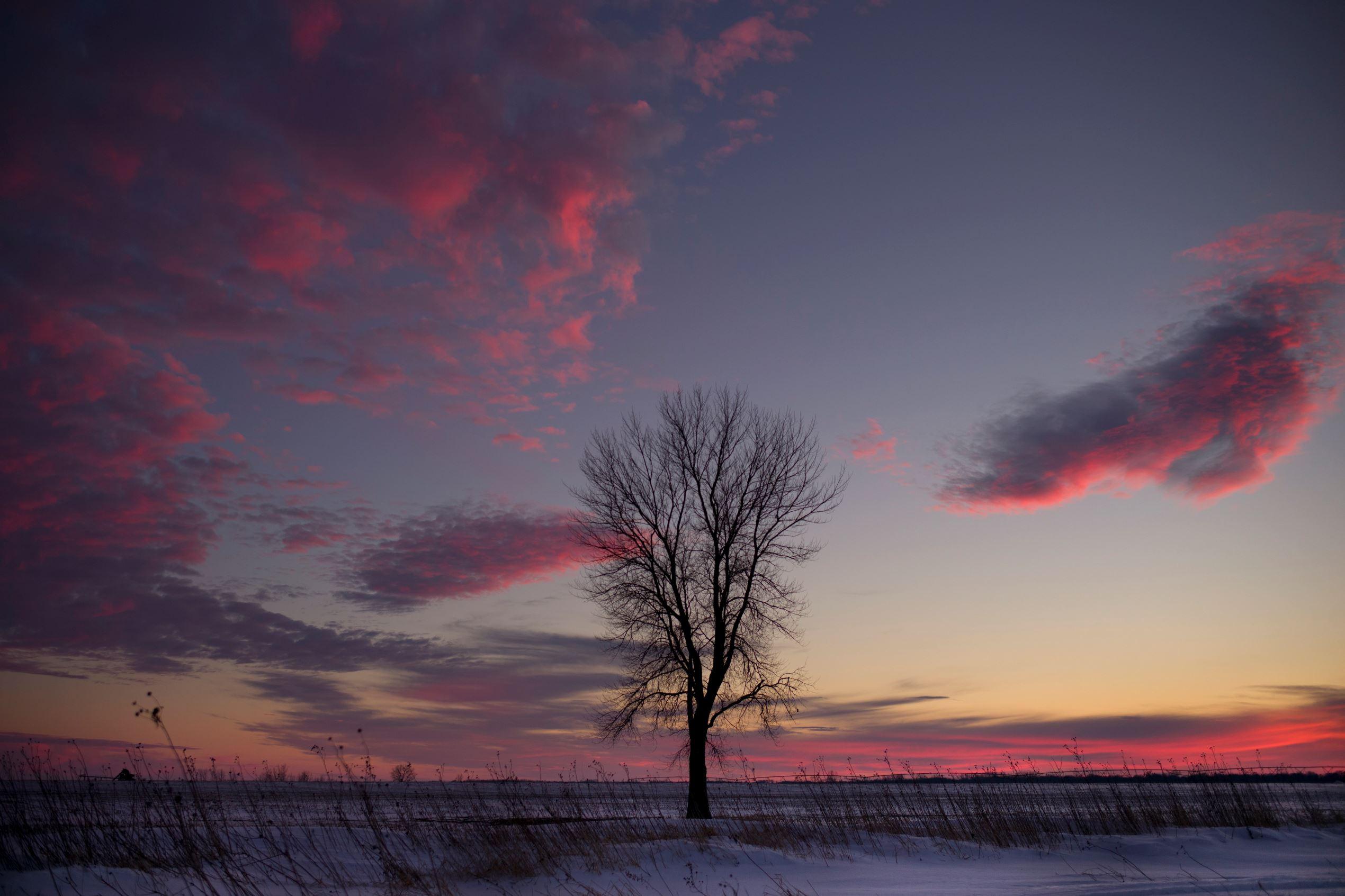 Слайд 15 из 86: A tree stands in a snow-covered field during sunset Friday, Jan. 29, 2016, near Spencer, Iowa. (AP Photo/Jae C. Hong)
