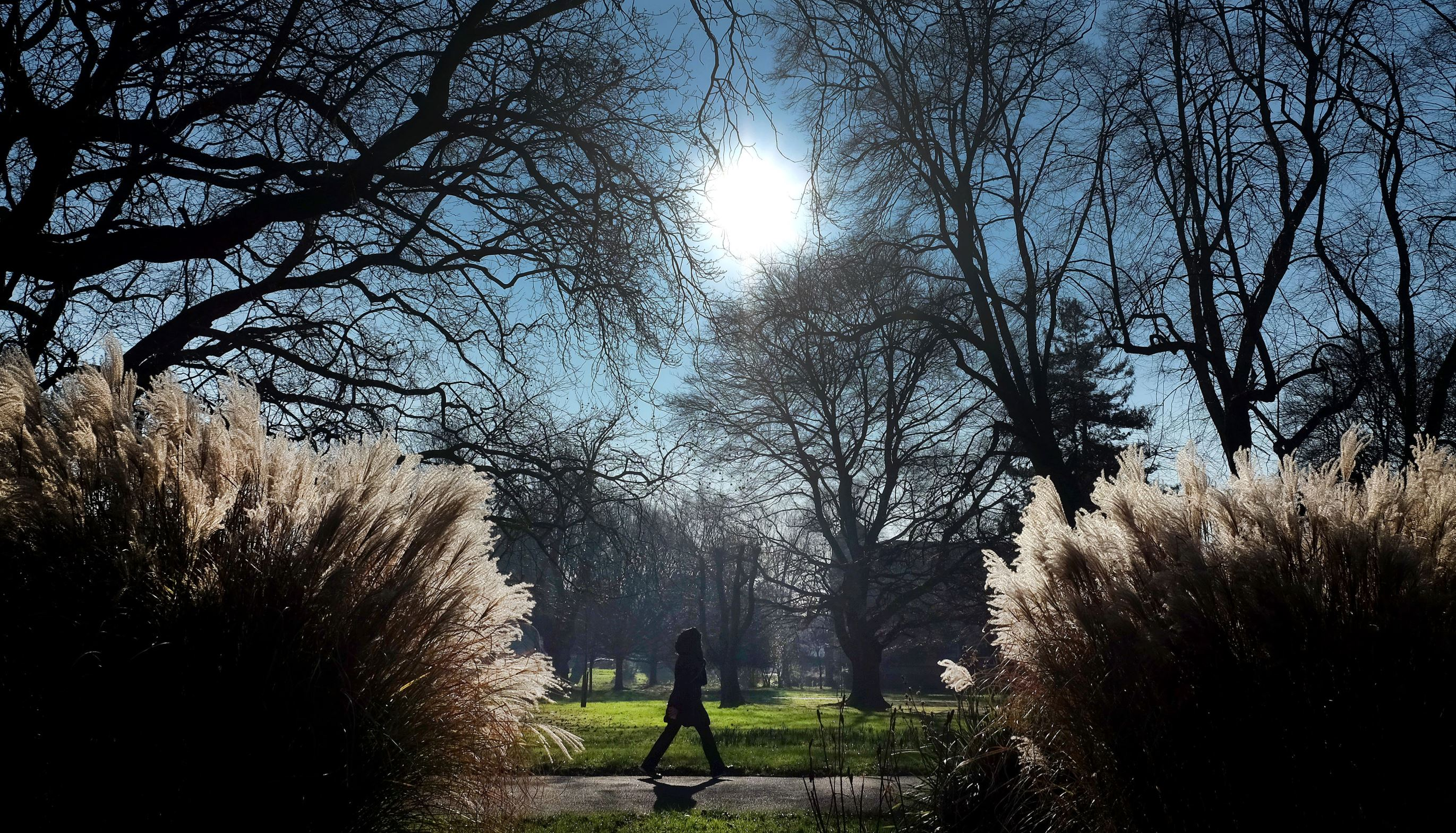 Слайд 14 из 86: A pedestrian walks past ornamental grasses in a park in London, Wednesday, Jan. 20, 2016. Temperatures in London dropped below zero, the lowest this winter yet, with clear skies and plenty of winter sun in the capital. (AP Photo/Kirsty Wigglesworth)