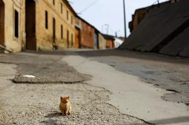 'Ah ne kadar tatlı' deyip geçtiğiniz yavru kedilerin çoğu sadece bir kaç gün yaşıyor.