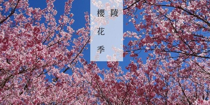 2019 武陵櫻花季   我在台灣遇見櫻花林,櫻花樹下的野餐,台灣也有櫻花雨