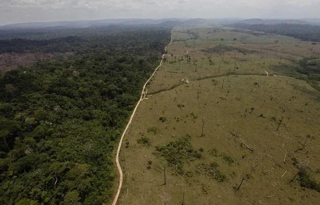 Cette photo, prise en 2009, montre la déforestation de la forêt Amazonienne au Brésil.