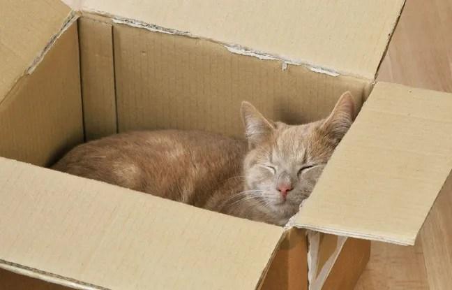 Une chatte a survécu 8 jours coincée dans un colis postal.