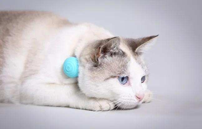 Le pendentif connecté Canhe-Fit pour les animaux de compagnie sera commercialisé en France en septembre 2016.