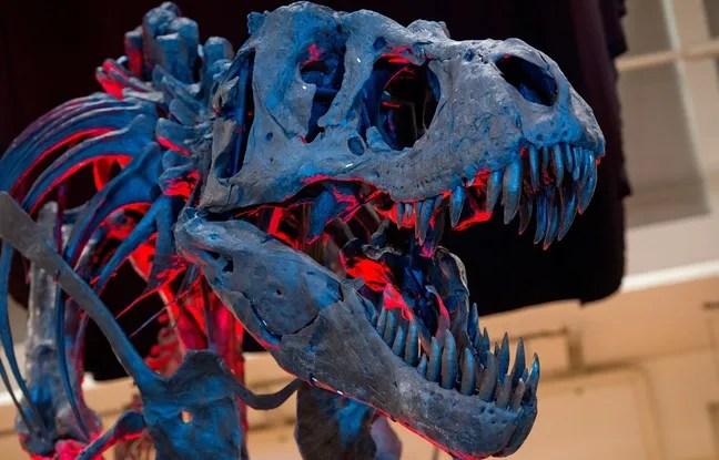 Le squelette d'un Tyrannosaurus Rex exposé en octobre 2014 à Munich.