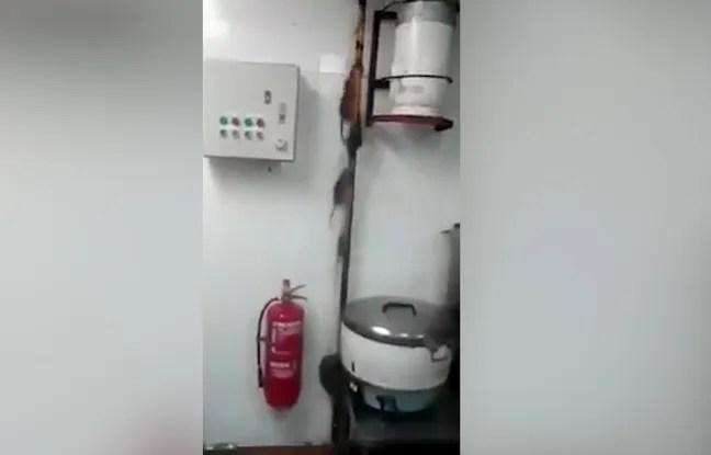 Une course de rats