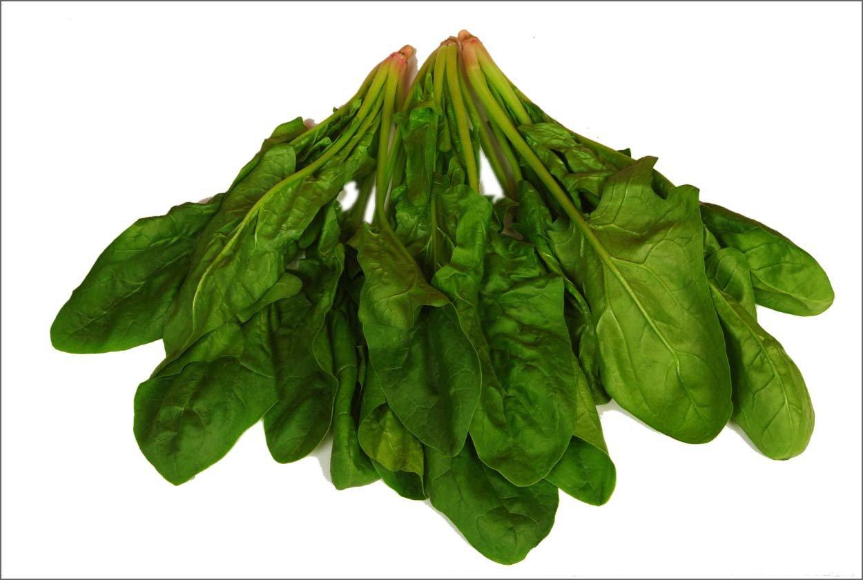 Fresh spinach productsChina Fresh spinach supplier